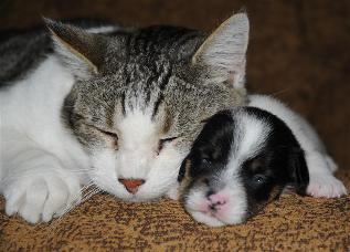 tommy the cat and puppy