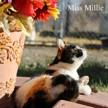 Miss Millie, the cat